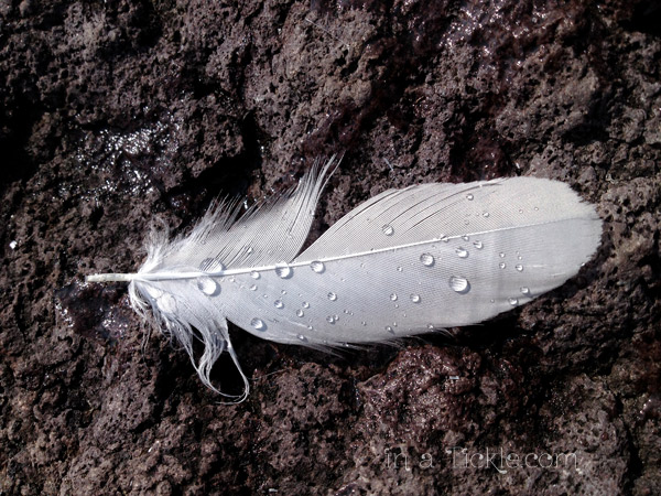 Feather on Rock