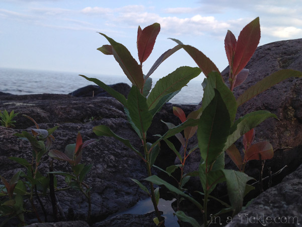 Plants on Rocks