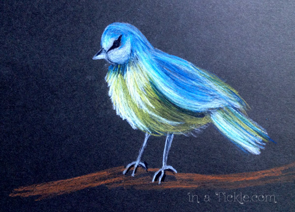 Colored Pencil Bird Sketch